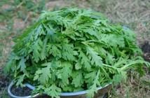 10 loại rau củ tốt cho người đau nhức xương khớp